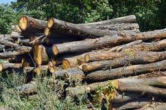 Oostenrijk, Forest Industry stock afbeelding