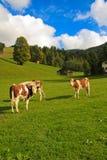 Oostenrijkse weide Stock Foto