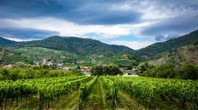 Oostenrijkse wijngaard Stock Afbeelding