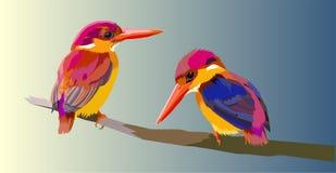 Oosterse dwergijsvogel kleine vogels vector illustratie