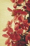 Oosterse grungy bloemenachtergronden Stock Foto