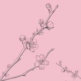 Oosterse kersen vectorillustratie Royalty-vrije Stock Afbeeldingen