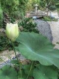 Oosterse Lotus Garden Stock Foto