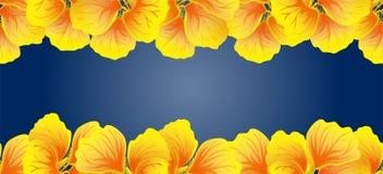 Oostindische kers Naadloze grens Gele bloemen Mooie Horizontale banner Donkerblauwe achtergrond Kaart, uitnodiging, affiche, het  Stock Fotografie