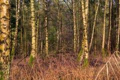 Oostvaardersplassen na Holanda Fotos de Stock Royalty Free