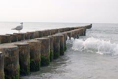 Oostzee Stock Foto's