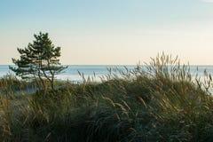 Oostzeekust en boom Royalty-vrije Stock Foto