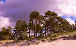 Oostzeekust in Letland Stock Afbeeldingen