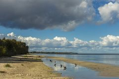 Oostzeekust in Letland Zandduinen met pijnboombomen en wolken stock fotografie