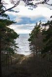 Oostzeemening van bos Royalty-vrije Stock Afbeelding