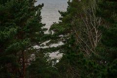 Oostzeemening van bos Royalty-vrije Stock Afbeeldingen