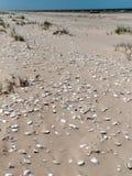 Oostzeestrand met rotsen en shells Stock Foto's