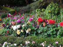 ooty的植物园的,印度花园 免版税图库摄影