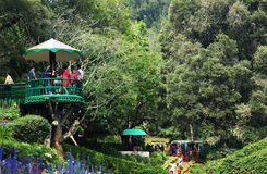 Ooty botanisk trädgård arkivbilder