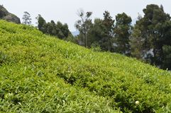 Ooty, Tamil Nadu India. Ooty landscape scenery, Tamil Nadu India Royalty Free Stock Images