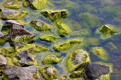 Moss on the shore Stock Photos
