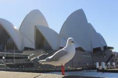 Opéra Sydney de mouette images libres de droits