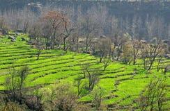 Opération cultivant dans le district de Kangra, prad himachal Images stock