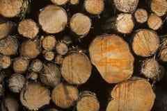 Opérations et abattage de coupe d'arbre de région boisée Image libre de droits
