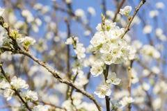 Opóźneni zima kwiaty obrazy stock