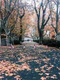 Opóźniona jesień obraz stock