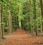 Opóźniona jesień w Angielskim drewnie Zdjęcie Royalty Free
