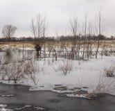 Opóźniona jesień Zamarznięty staw pod cienkim lodem z wierzbowymi krzakami r w nim Zdjęcie Royalty Free