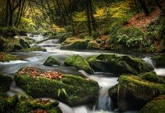 Opóźniony jesień mech, Golitha spadki, Cornwall obrazy royalty free