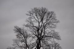 Opóźniony jesieni drzewo w jeden dniu z ciężką obłoczną pokrywą Obrazy Royalty Free