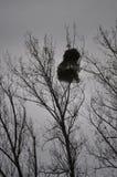 Opóźniony jesieni drzewo w jeden dniu z ciężką obłoczną pokrywą Zdjęcia Royalty Free