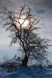 Opóźniony zimy popołudnie zdjęcia royalty free