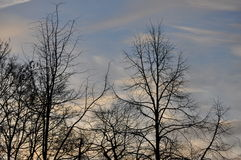 Opóźneni jesieni drzewa w wczesnym poranku Fotografia Royalty Free