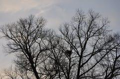 Opóźneni jesieni drzewa w wczesnym poranku Zdjęcia Royalty Free