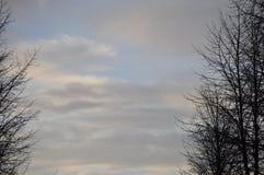Opóźneni jesieni drzewa w wczesnym poranku Obrazy Stock