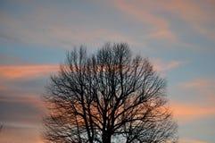 Opóźniony jesieni drzewo w wczesnym poranku Zdjęcia Stock