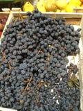 Opõe o mercado de fruto Fotos de Stock Royalty Free