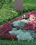 Opłakiwać grób z sedum bylinami w jesieni Obrazy Royalty Free