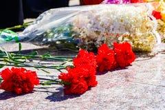 Opłakiwać kwiaty, goździki, opłakuje zdjęcie royalty free