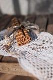 Opłatek rolki na koronkowej pielusze Fotografia Royalty Free
