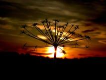 Op de achtergrond van de zonsondergang Stock Fotografie