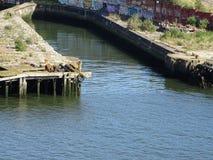 Op de autoveerboot royalty-vrije stock afbeelding