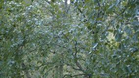 Op de bladeren vallen en regen die neer druipen stock videobeelden
