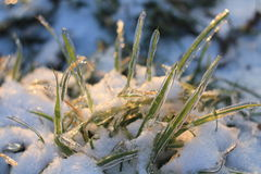 Op de grens van de winter en de lente Royalty-vrije Stock Foto