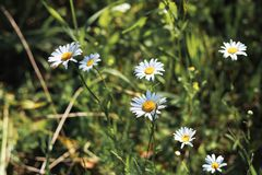 Op de groene weide van mooie wilde bloemenclose-up royalty-vrije stock afbeeldingen