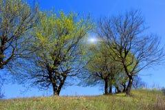 Op de heuvel in Transsylvanië Roemenië Stock Afbeelding