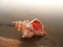 Op de kust van het koude overzees stock foto