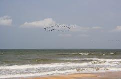 Op de overzeese kust Royalty-vrije Stock Foto
