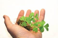 Op de palm van mijn hand Royalty-vrije Stock Foto