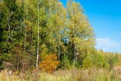 Op de rand van het de herfstbos stock foto's