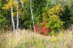 Op de rand van het de herfstbos royalty-vrije stock afbeelding
